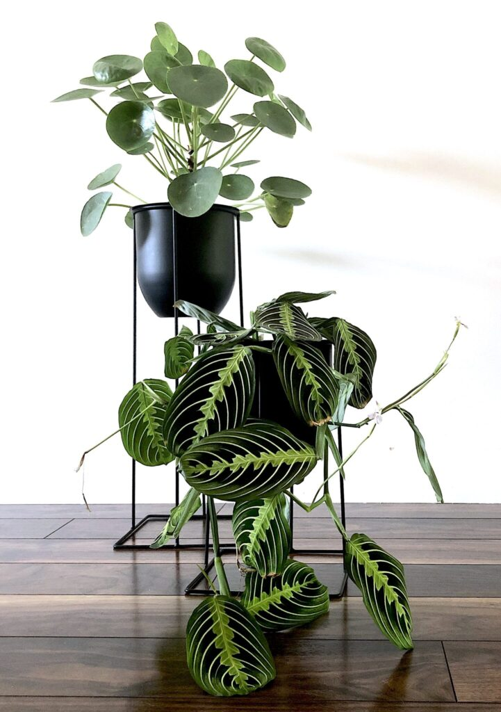Unique Plant Stands Ideas For Your Home My Tasteful Space